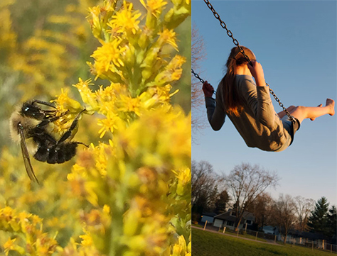 Split image of winning photos - bee on yellow flower and girl swinging